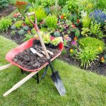 Red wheelbarrow filled with mulch, shovel and gardening tools in front of a colorful, drought-resistant garden. Plantings can be beautiful and energy efficient