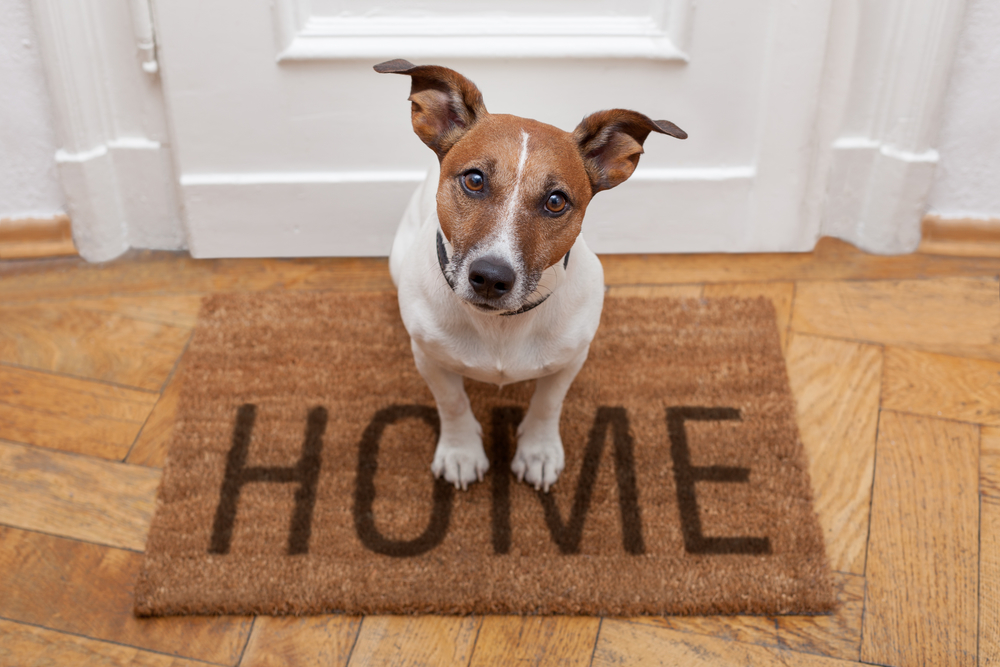 "Puppy sitting on a ""home"" welcome mat. Air purifiers can be helpful for reducing the amount of pet dander in the air, but it's important to select one that is energy efficient."